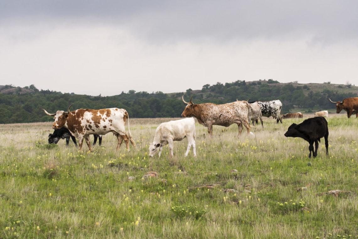 Humane Handling & Animal Welfare
